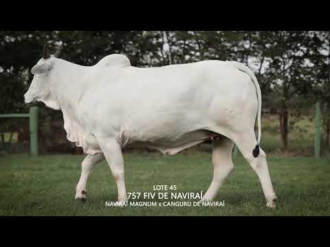 LOTE 045   CSCK 757