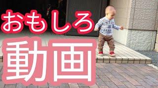 和田アッコさんが出ているマルハンのcmを赤ちゃんにみせてみた!意外と...