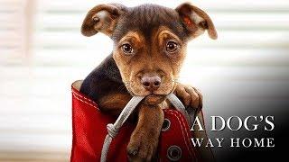 Путь домой / A Dog's Way Home (2019) Дублированный трейлер HD