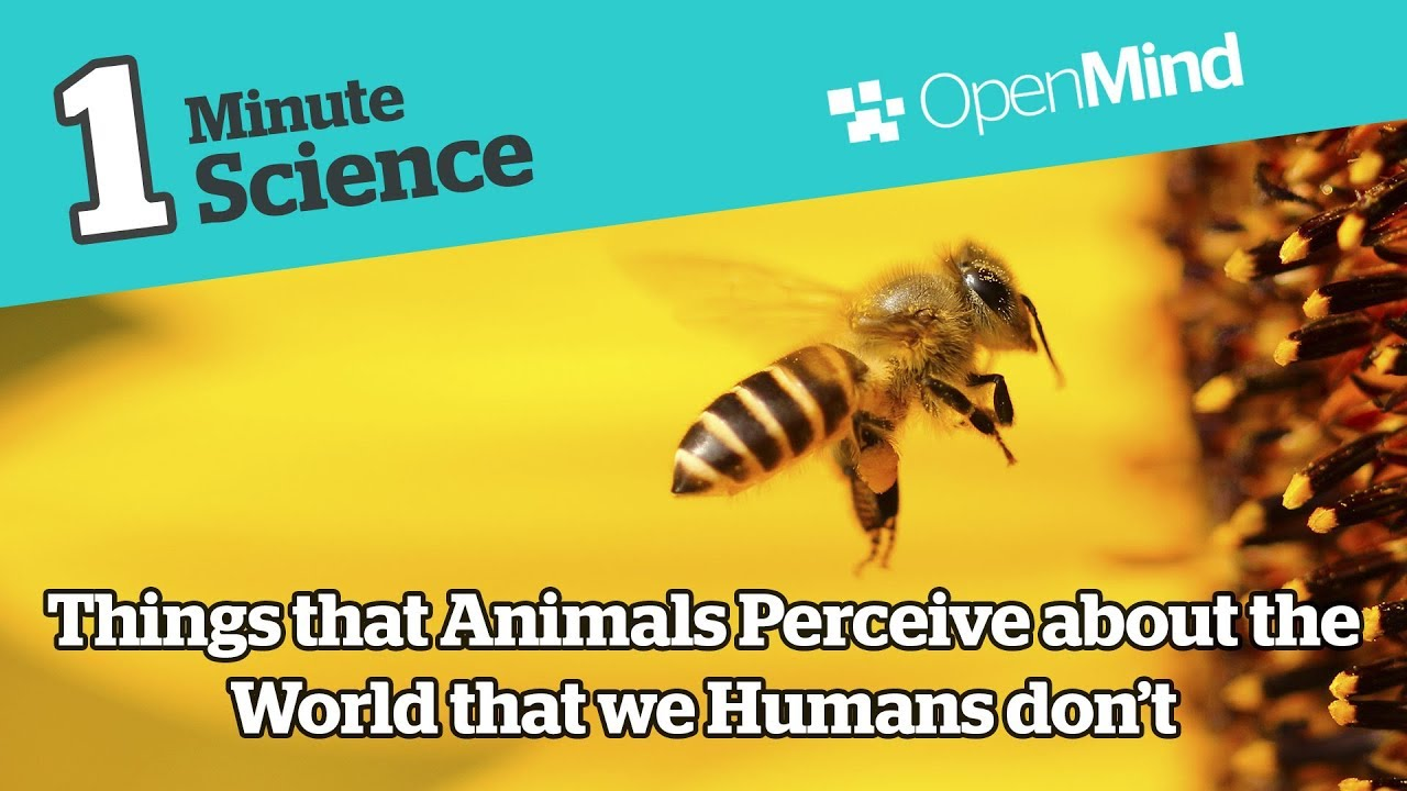 Things that Animals Perceive about the World that we Humans