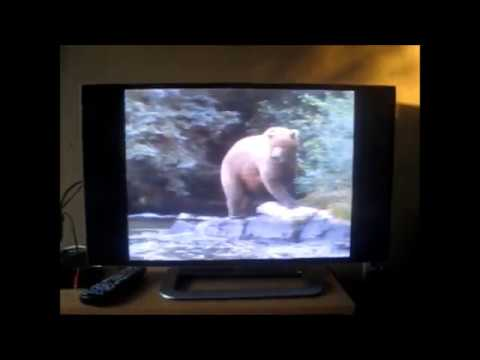 Audubon's Animal Adventures: Wolf, Bear, and Panther & Cougar Adventures Part 5