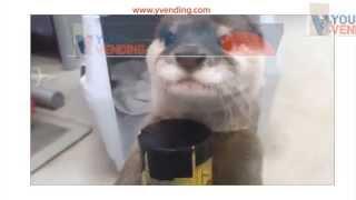 Ласка и торговый автома (занятное видео)