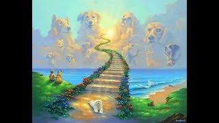 Куда уходят собаки. Владимир Шамов