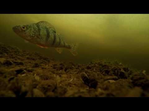 Съемка на Волге у Пучежа подо льдом