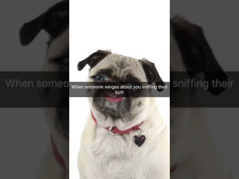 Bum sniffer dog
