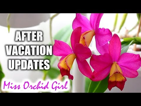 Vacation is over, back to Orchid duty! - Updates, good & bad news