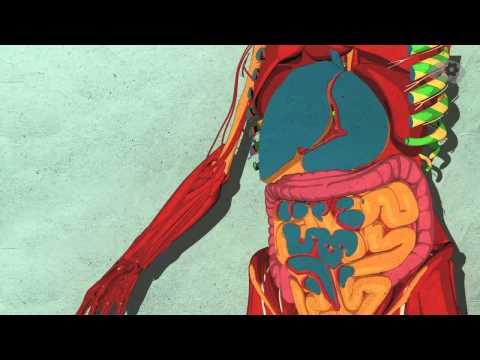 что влияет на сахар в крови, ответы врачей, консультация