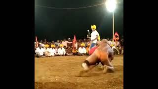 Best Wrestling Moves | Ajeet Patil