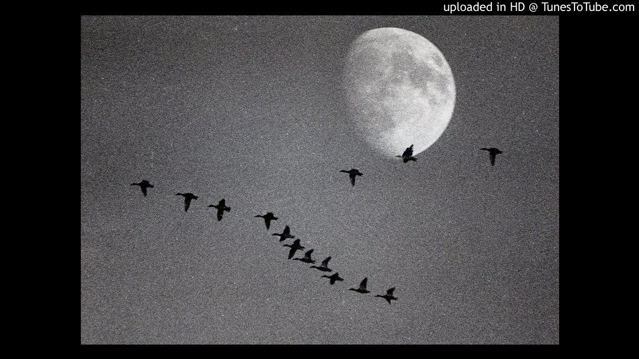 летят перелётные птицы караоке онлайн