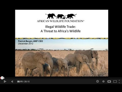 Recording of Live Webinar on Wildlife Trafficking with AWF's CEO