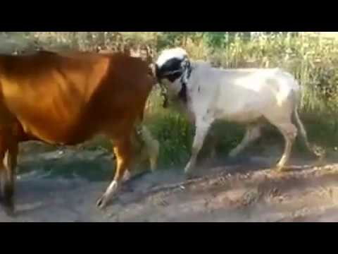 When a drunk gay boy meets a horny dog !! http://TheGayRealWorld.com from YouTube · Duration:  5 minutes 11 seconds