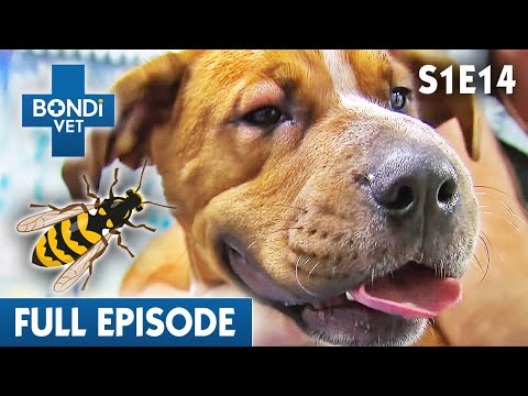 BONDI VET - Season 1 Episode 14
