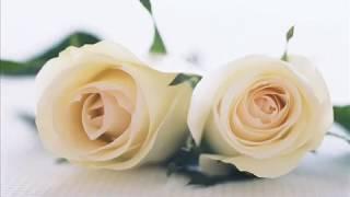 Mevlid-i Nebi Programı Giriş Videosu