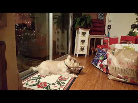 Toby's Gifts Cairn Terrier Dog
