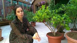 Уход за  комнатными растениями дома и в зимнем саду. Прогулки по оранжерее №7.