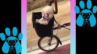 funny videos of cute and crazy dogs from the internet