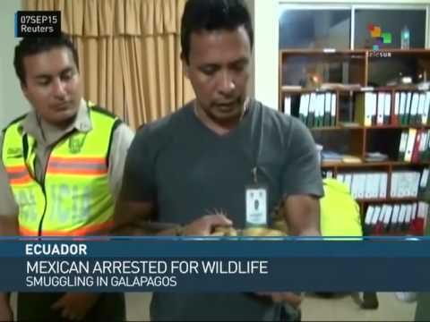 Ecuador: Wildlife Smuggler Arrested in Galapagos Islands