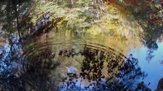 Jonathan Still ~ Look deep into Nature.