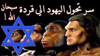 سر تحول اليهود الي قردة ولماذا غير الله خلقتهم .. سبحان الله