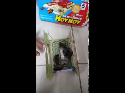 Hoy hoy cockroach traps
