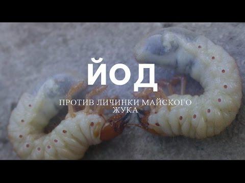 Использование йода в борьбе с личинкой майского жука.