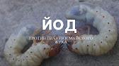 Мазь ям фунгибак купить мазь ям купить киев · ям фунгибак мазь 50г. Код товара: 302. Производитель: оллкар ооо (украина), есть в наличии, 30. 00 грн.