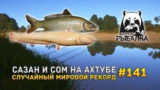 Сазан и Сом на Ахтубе. Случайный мировой рекорд - Русская Рыбалка 4 141