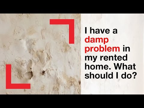 What you can do about damp and mould in your home