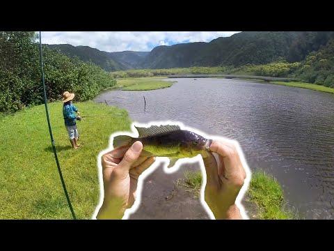 Tilapia Fishing In A Hawaiian Valley / Big Island Micro Fishing S3.E7