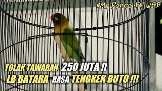 Bob Bkm Sipol Love Bird Batara Rasa Tengkek Buto