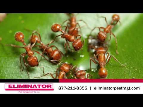 Eliminator Pest Management | Pest Control in Fond du Lac