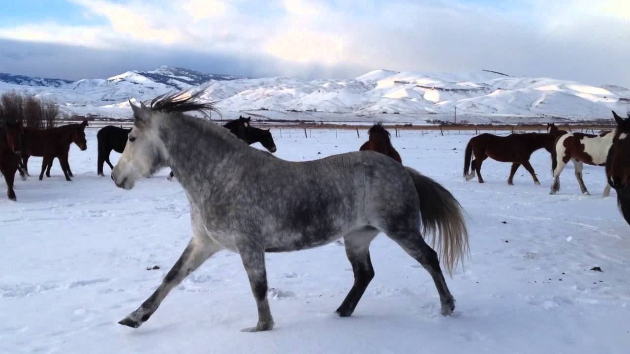 2009 Challis Idaho Wild Mare Returns To Her Wild Roots, Family and Friends