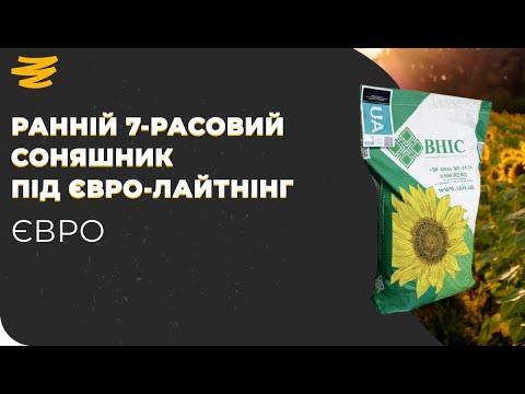 Download УКРАЇНСЬКИЙ РАННІЙ 7-РАСОВИЙ СОНЯШНИК🤟. ЄВРО