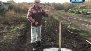 """""""В помощь садоводам"""" Как правильно посадить вишню"""