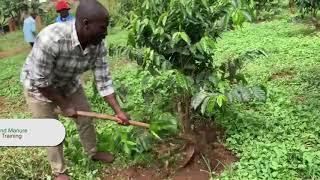 Mulching and Manure - Step 6