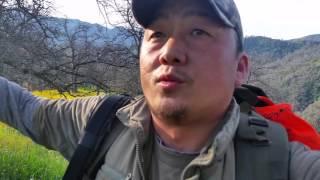 TEAM HMONGOL wild pig hunting