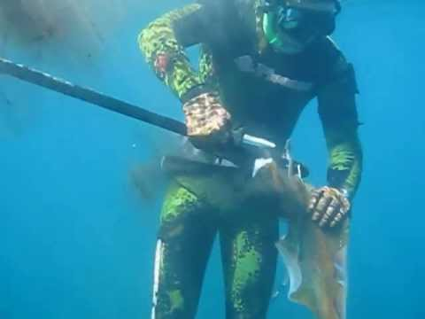 Spearfishing Calamari Squid