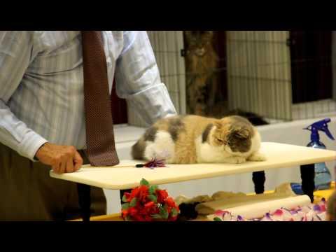 2012 Santa Monica Cat Show