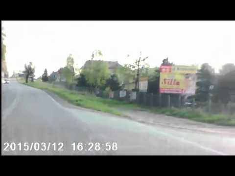 Łoś przebiega przez ulicę w Limanowej