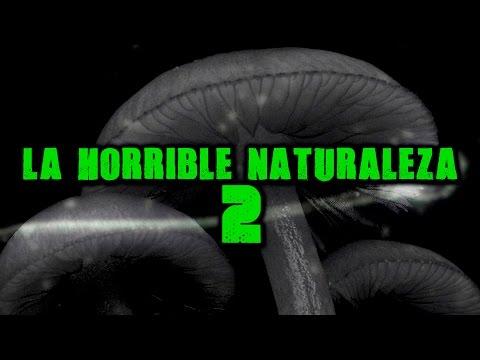 La horrible naturaleza 2 | Dross (Angel David Revilla)