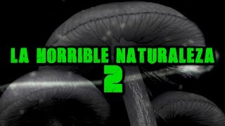 La horrible naturaleza 2 | Dross (Angel David Revilla)