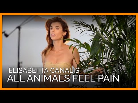 Elisabetta Canalis: Snakes, Lizards, and Crocodiles Feel Pain, Too
