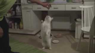 Paavo the Deaf Cat // Meow for raw fish