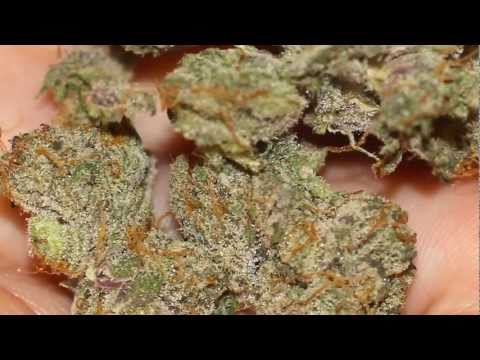 HD Weed - The Godfather (10/10 DANK!) From F.H.W.C. [OG Kush x Grandaddy Purple]
