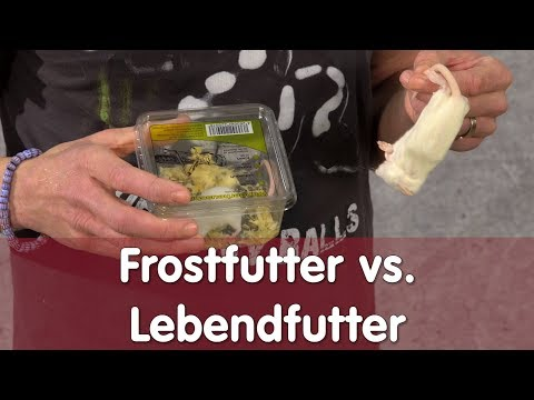 Reptil TV - Praxis - Frostfutter vs. Lebendfutter