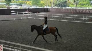 Girl cantering along coolly until all hell break loose