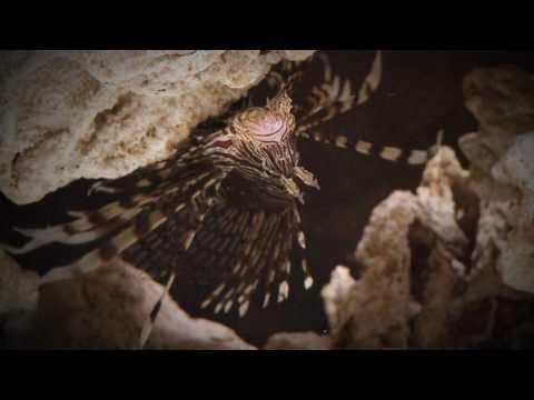 Lionfish Invasion - Changing Seas
