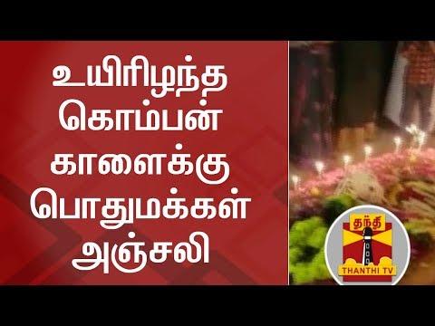 Public pay floral tribute to Minister Vijayabaskar's 'KOMBAN' Bull | Thanthi TV | Jallikattu