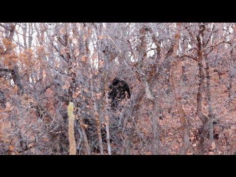 Yahoo! - Provo Canyon Bigfoot Encounter (GrindTV)