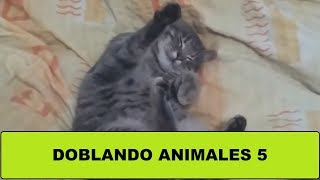 Doblando animales 5